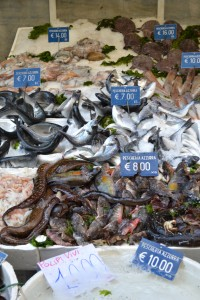 Oodles of Fish for sale