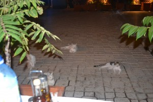 Dinner Guests in Laurium