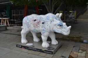 Aussie Rhinos
